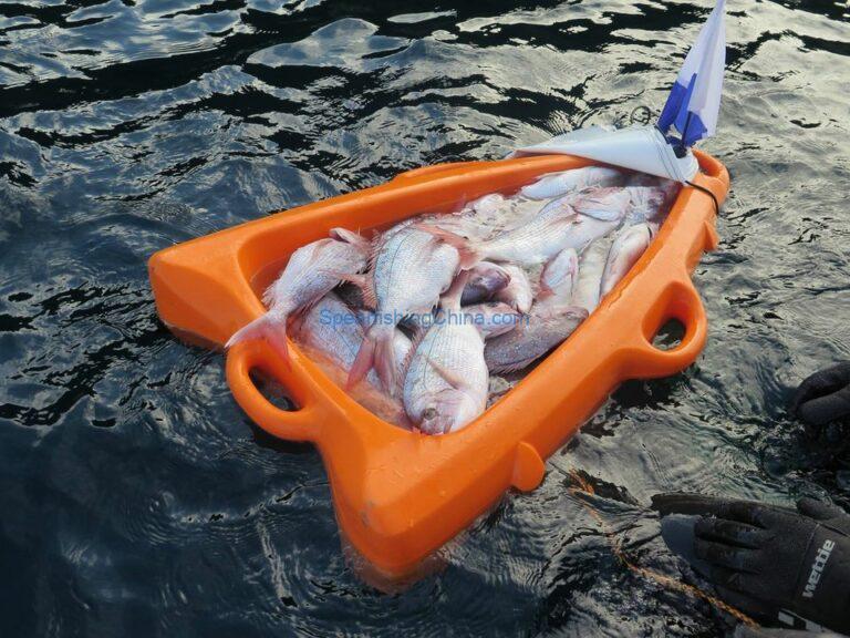 自由潜捕鱼有什么注意事项?