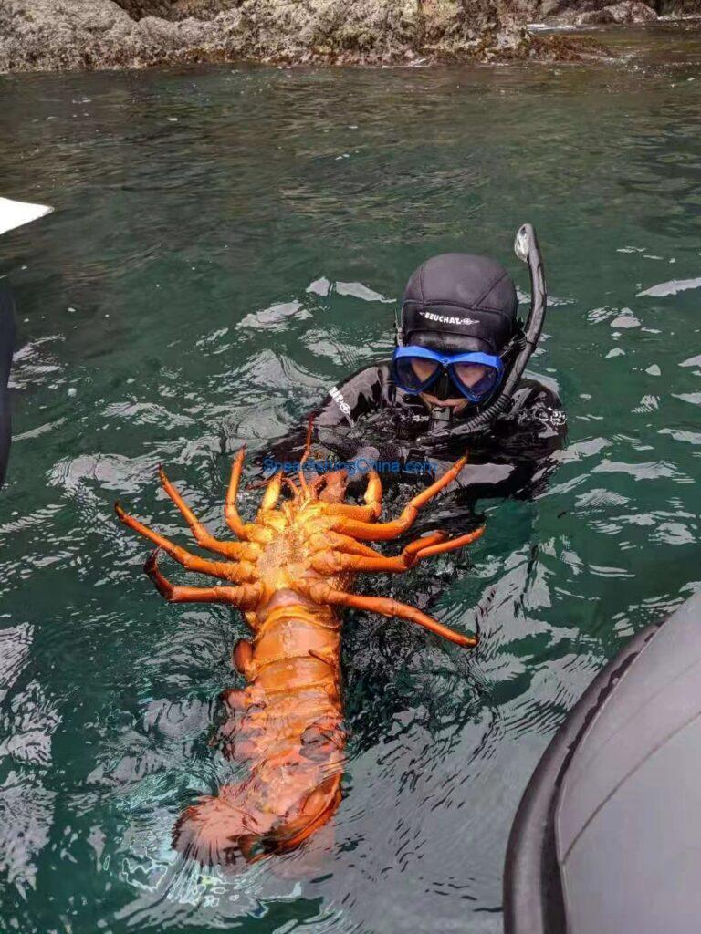 女生漁獵日記:鮑魚龍蝦之鄉凱庫拉、威靈頓之旅/回憶錄