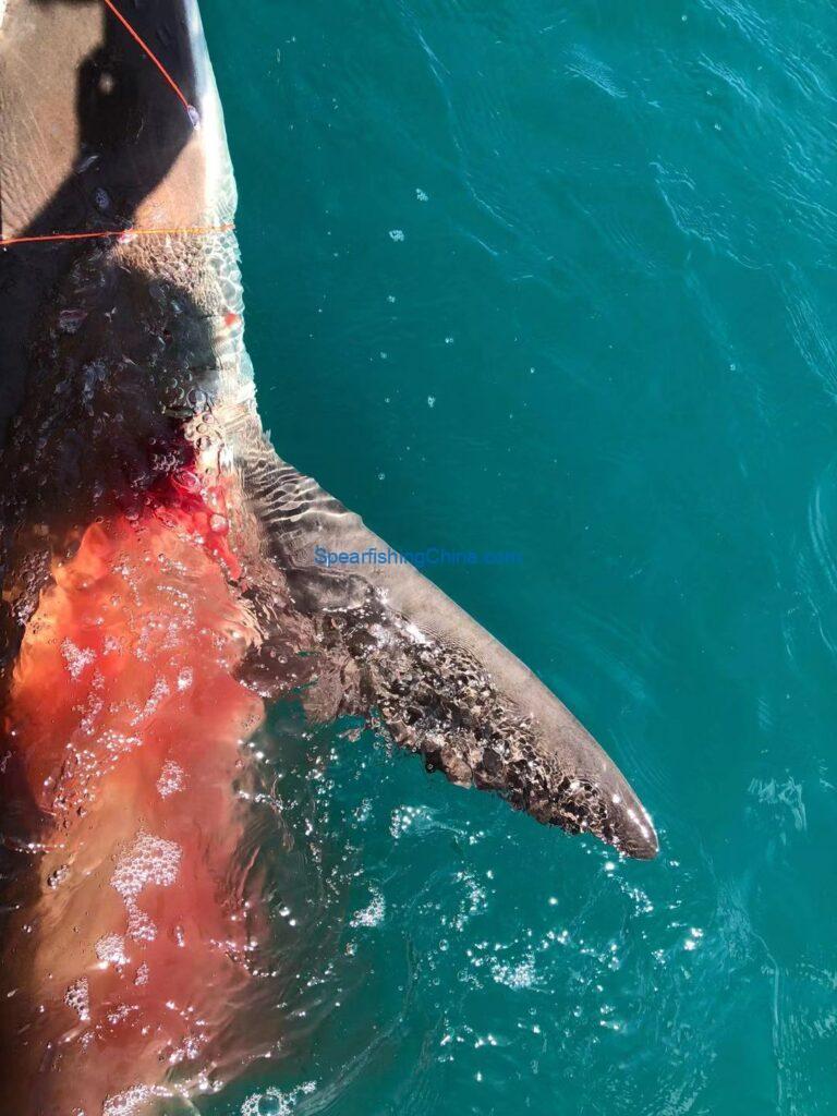 女生漁獵日記:獵鯊